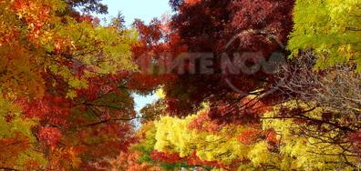 Цветната феерия на Октомври!