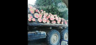 Кражба на дърва