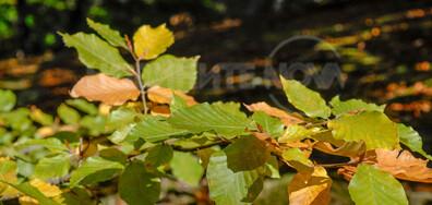 Есен в Котленския Балкан