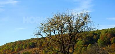 Красиво, есенно Лудогорие!
