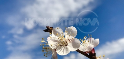 Първите цветчета