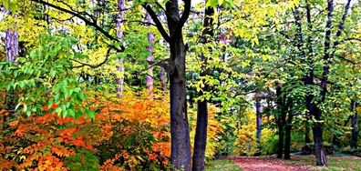 """Красотата на октомври в """"Скобелев парк"""""""
