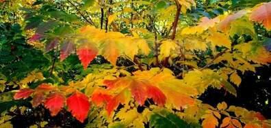 Есента рисува