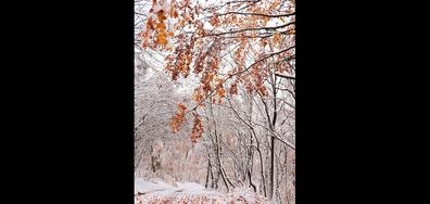 Пътеки от сняг и листа