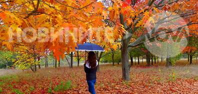 Дъждовна есен!