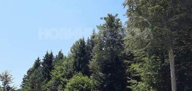 Изсичането на горите в местност Узана
