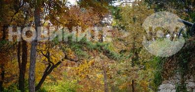 Златна есен в Скобелевия парк
