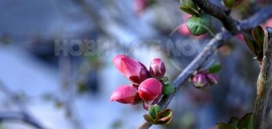 Пролетна омая!