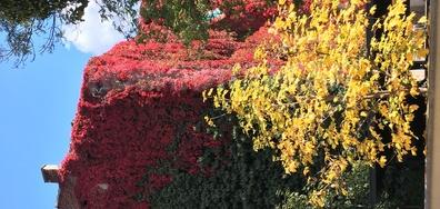 Софийска есен