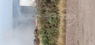 Голям пожар до Бургас