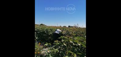 """""""Озеленяването"""" в нов гробище парк Банкя"""