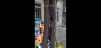 """""""Дървото на желанията"""""""