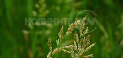 Зелен растеж