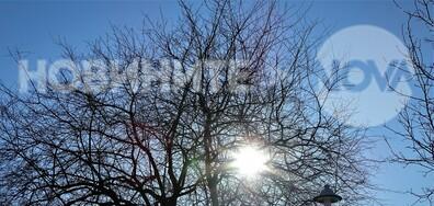 Слънце в клоните!