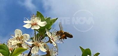 Затоплянето събуди пчеличките