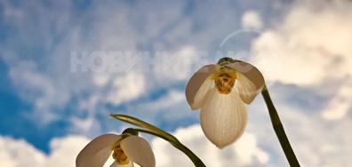 Пролетна нежност под бурното небе