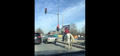 Принцът на белия кон е забелязан в Пловдив!