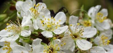 Отново дъх и цвят на пролет!