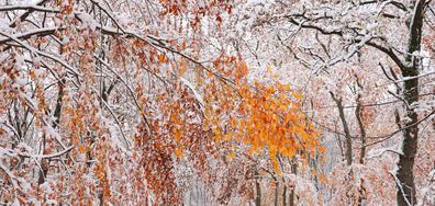 Срещата на есента и зимата