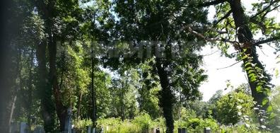 Централен гробищен парк