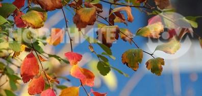 Цветно,есенно