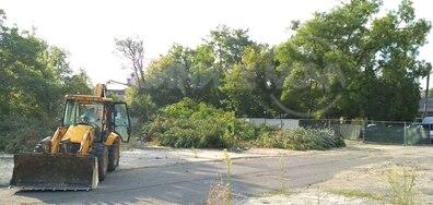 Масово изсичане на стари дървета в центъра на Кърджали