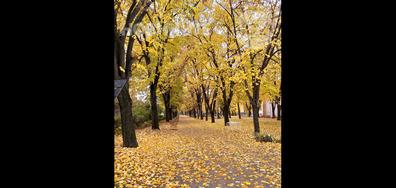 Златна есен във Видин