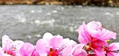 Здравей, пролет!