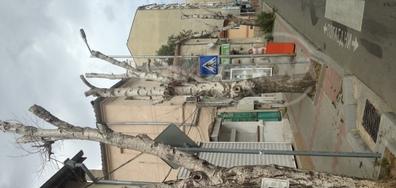 Най-страшното унищожение на дървета във Варна