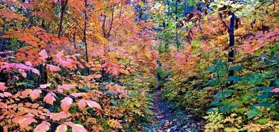 """Многоцветна есенна палитра на една горска пътека в """"Скобелев парк"""""""