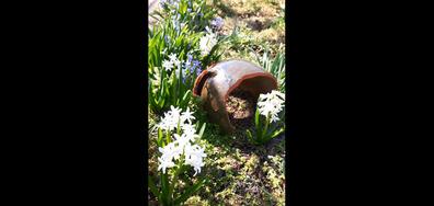 Пролетен поздрав