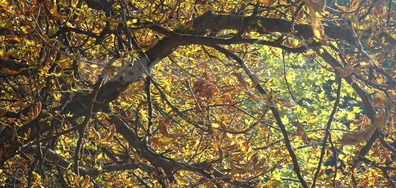 В клоните е есента