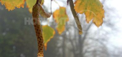 Мъгливо утро край Плевен