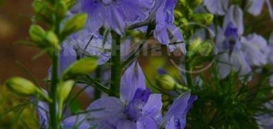 Цвеке