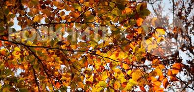 Есента в позлата в Конявската планина