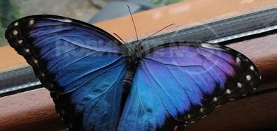 Красиви пеперуди в Благоевград!