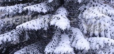 Снежно в Плевен!