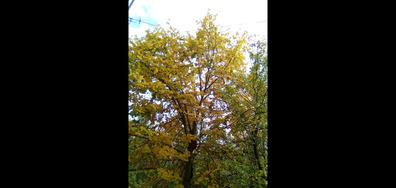 Есенно време в Горна Оряховица