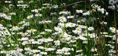 Нежността на пролетта!