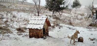 Сняг се сипе на парцали