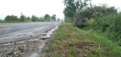 Окосена трева по път Кубрат-Разград
