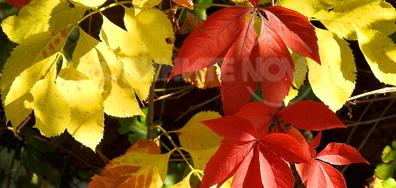 Красивите багри на есента!