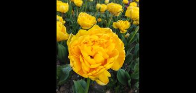 Цветята
