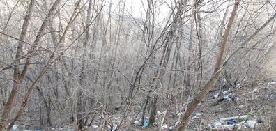 Замърсяване на гора в Елена