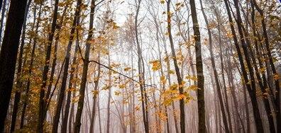 Мъгливата есен