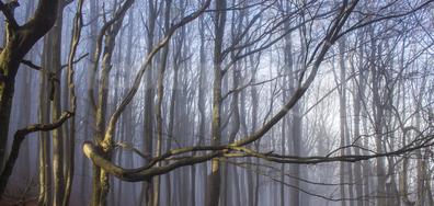 Мъглива есен