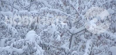 Снежен понеделник!