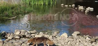 Кучета в Град Самоков