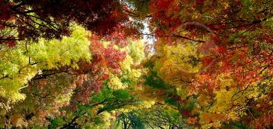 Природата - най-великият художник!