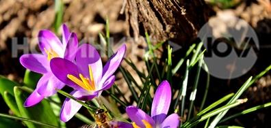Времето се оправи и пчеличките се разшетаха!